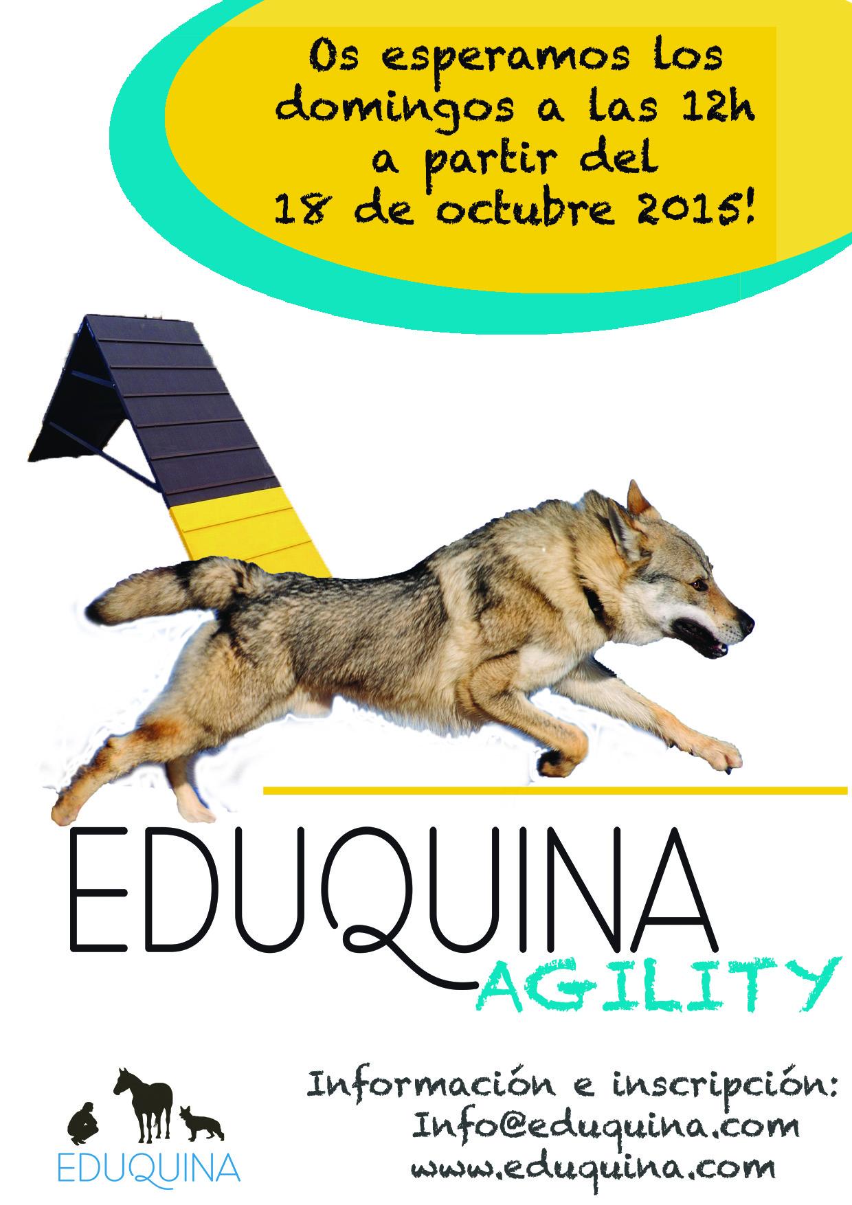 agility 18 octubre (1)
