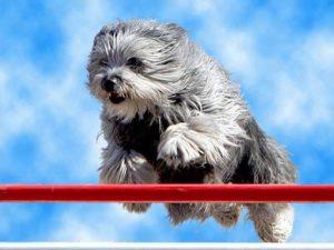 Dog-Jump